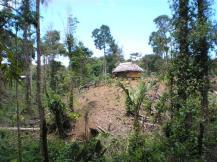 Bocas habitat loss