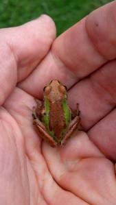 280 sp 14 frog