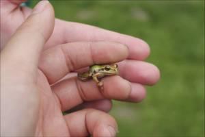 280 sp14 frog