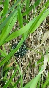 280 sp14 garter snake
