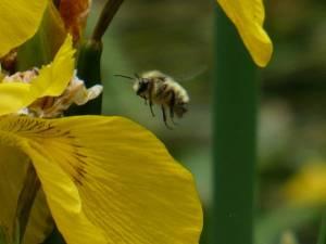 280 sp14 pollinators