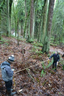 UW undergraduates, Kramer Canup and Tristan O'Mara lay out a permanent monitoring plot in the understory of Seattle's Seward Park.